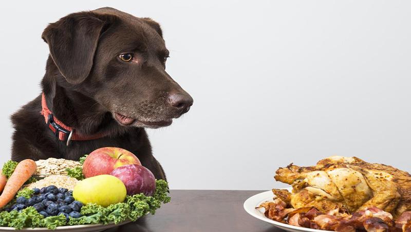 Σκύλος, απαγορευμένες τροφές