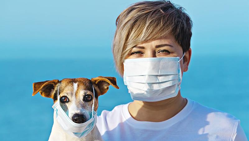 Κορωνοϊός και ζώα – Μεταδίδεται ο ιός;