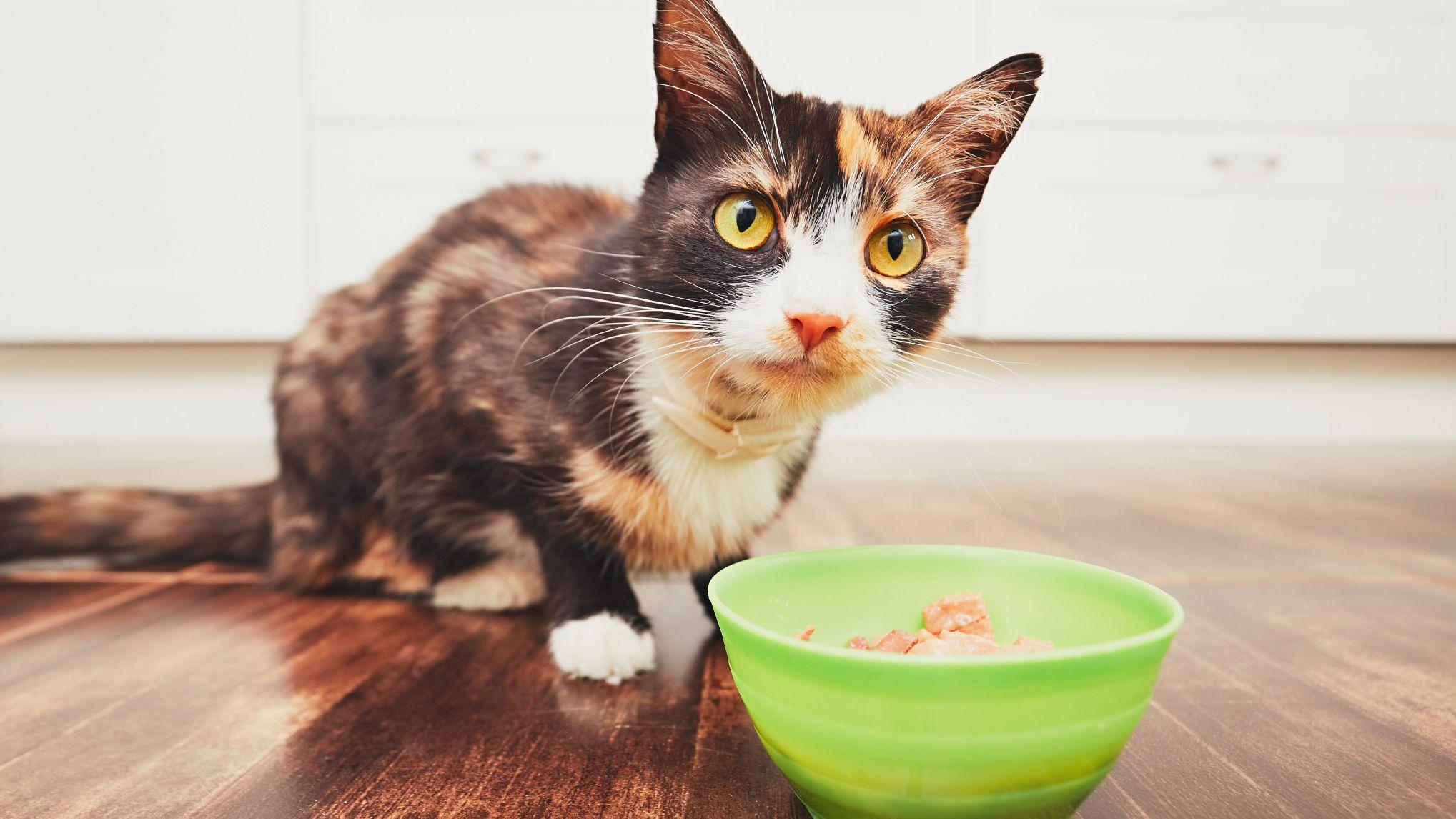 Γάτα, απαγορευμένες τροφές