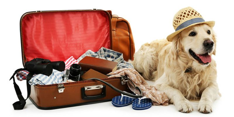 dog holiday pet action νεα ιωνια