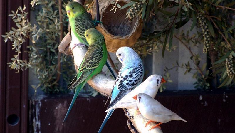 Υγεία & Φροντίδα Πτηνών